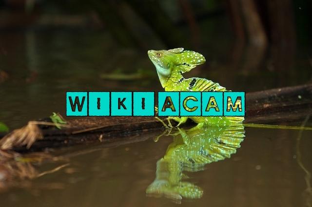 Archivo:Wikia-Visualization-Add-8,esacam.png