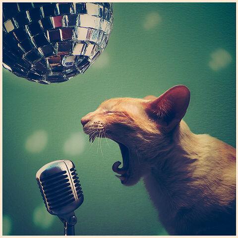 File:Rock-cat-roll.jpg