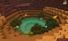 Creativerse 01 natural oasis