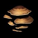 Mushroom Brown