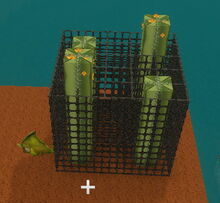 Creativerse Cactus Flowers dont need space sideways52