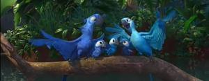 Rio-Baby Macaws