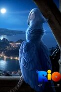 4748-rio-movie-2011-iphone-hd-wallpaper 320x480