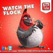 Watch The Flock