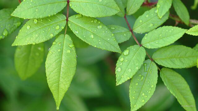 File:Little-green-leaves-2560x1440.jpg
