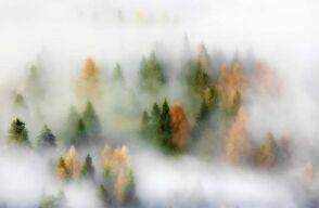 Foggyfores