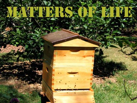 File:Matters of Life.jpg