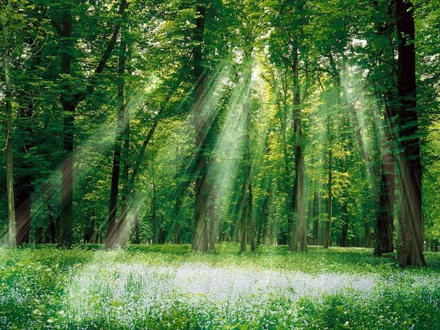 File:Magical Forest.jpg