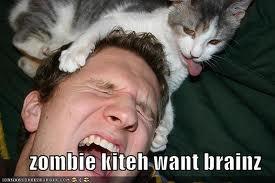 File:Zombie kitty.jpg