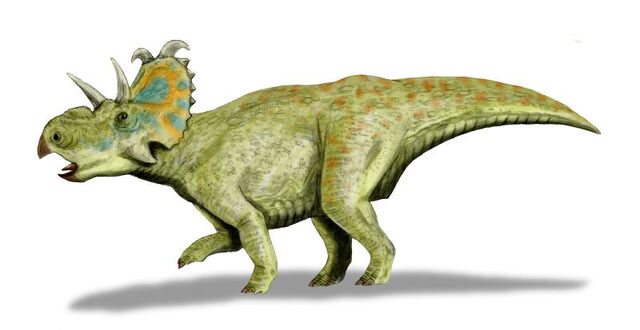 File:Albertaceratops BW2.jpg