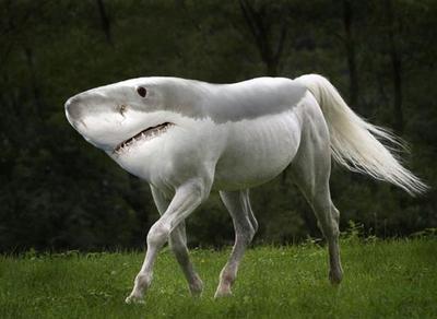 SHARK HORSE
