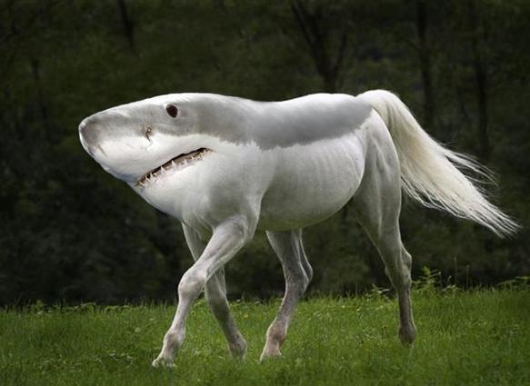 File:SHARK HORSE.png