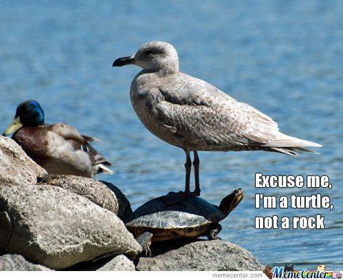 File:Scumbag-seagull o 2118073.jpg