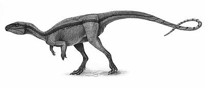 File:Agilisaurus.jpg