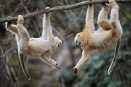 Monkeys7