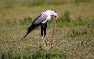 Bird-on-snake