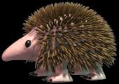 File:C3hedgehog.png