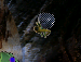 Thumbnail for version as of 23:29, February 25, 2005