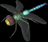 File:C3dragonfly.png