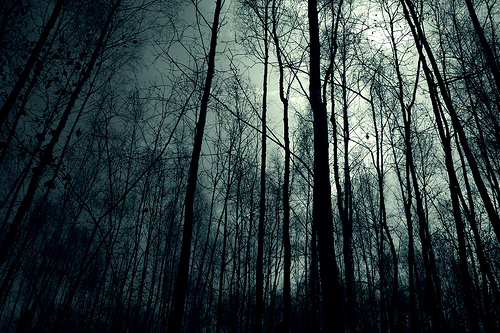 File:Dark-forest-night-image-31001.jpg