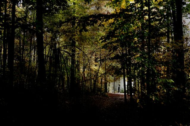 File:Slender forest 5.jpg