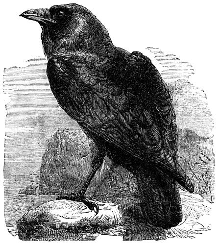 The Raven | Creepypasta Wiki | FANDOM powered by Wikia