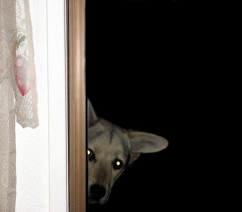 File:Dog Peeper.jpg