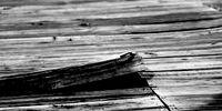 The Floorboards Creak