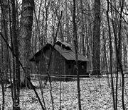 Old Forest Shack
