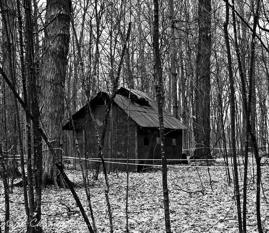 File:Old Forest Shack.jpg