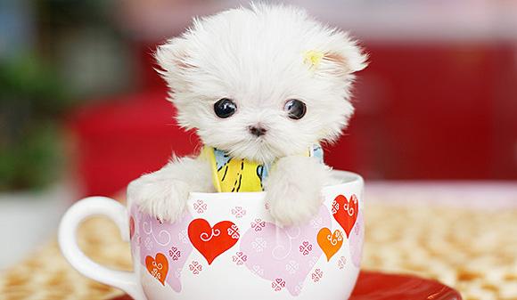 File:Cute-puppy-l1.jpg
