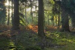 Datei:Forest.jpg