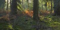 In einem dunklen Wald