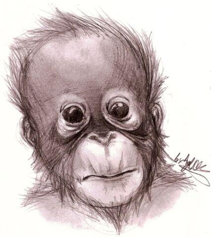 File:Monkey see.jpg