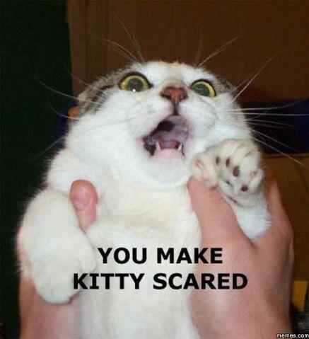 File:Scaredkitty.jpg