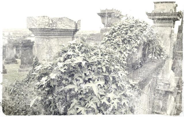 File:Overgrown.jpg