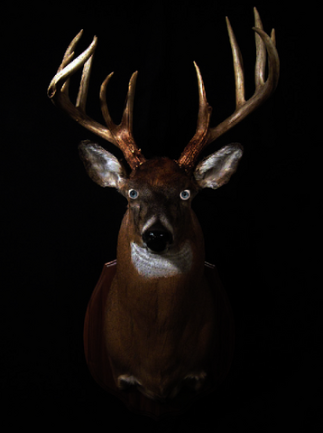 File:Deer head.png