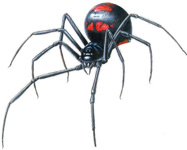 File:Black widow Spider. Monsters Project.jpg