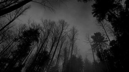 Forest-black-white-dark-forest-wallpaper