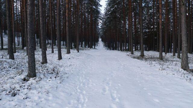 File:Frozen woods.jpg