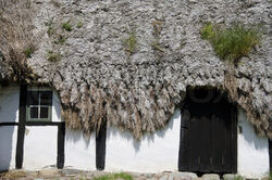 2188920-157232-detail-of-a-medieval-farm-house-with-sea-grass-thatched-roof