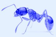 Formica Necropolia