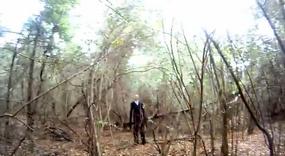 Slender forest 3