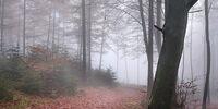 Elizabeth's Forest