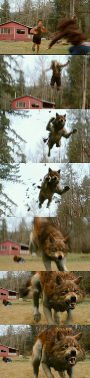 Jacob Black transformation.png