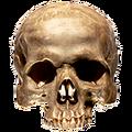 Thumbnail for version as of 18:42, November 24, 2014
