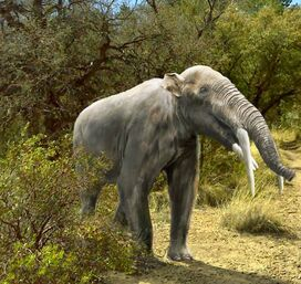 Gomphotherium angustidens by leogon-d83e9ni