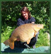 Big goldfish