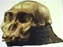Giants human giants ancient ancient civilization history