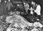 Mann Hill Island Carcass
